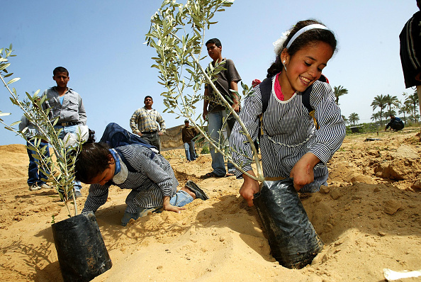 Planting「Palestinians Commemorate The 28th Anniversary Of Land Day」:写真・画像(6)[壁紙.com]
