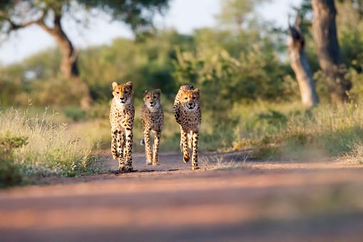 South Africa「Three Amigos」:スマホ壁紙(12)