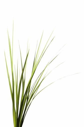 Blade of Grass「Tall Grass」:スマホ壁紙(19)