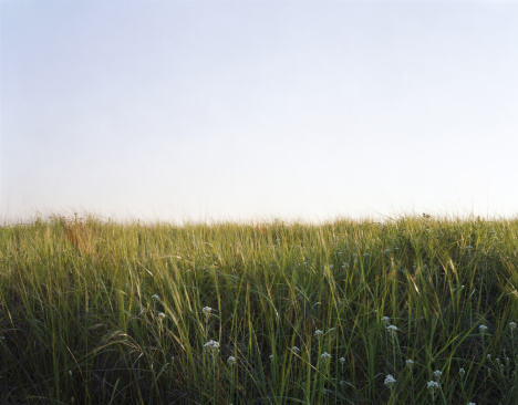 Wildflower「Tall grass, Long Beach, Washington, USA」:スマホ壁紙(11)