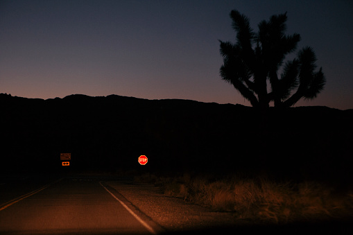 Dry「Road in desert at night with silhouette of Joshua tree on side, Joshua Tree National Park, California, USA」:スマホ壁紙(13)