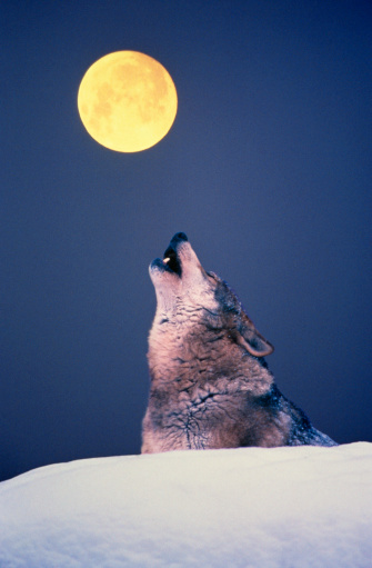 Moon「Wolf howling at full moon」:スマホ壁紙(15)
