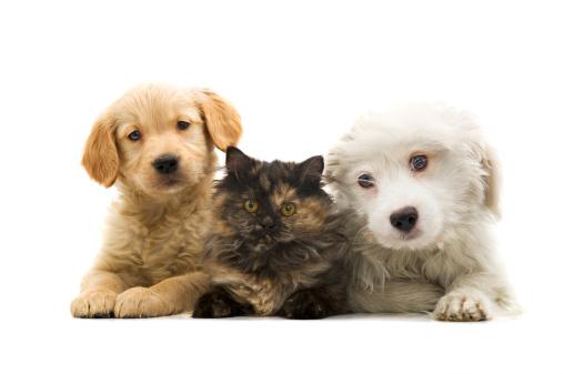 Domestic Cat「three buddies」:スマホ壁紙(6)