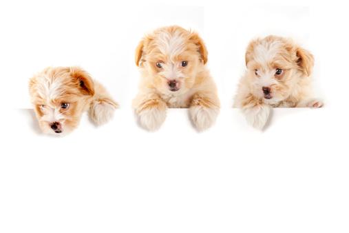Puppy「three buddies」:スマホ壁紙(5)