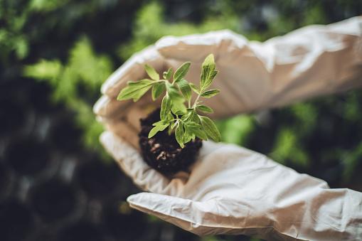 Planting「Indoor garden」:スマホ壁紙(15)