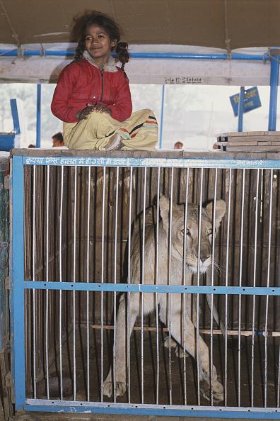 Big Cat「Pushkar Fair In Rajasthan」:写真・画像(15)[壁紙.com]
