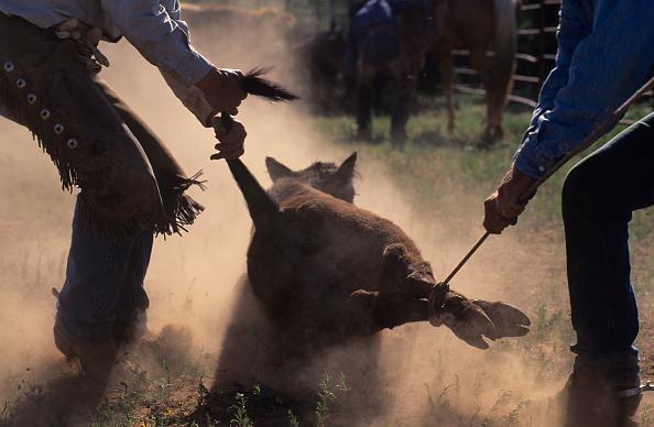 Animal Hair「Cowboys」:写真・画像(17)[壁紙.com]