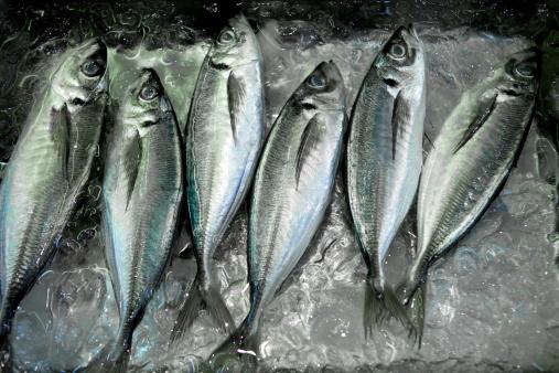 建築「Fresh  Mackerel at Tsukiji Market」:スマホ壁紙(17)