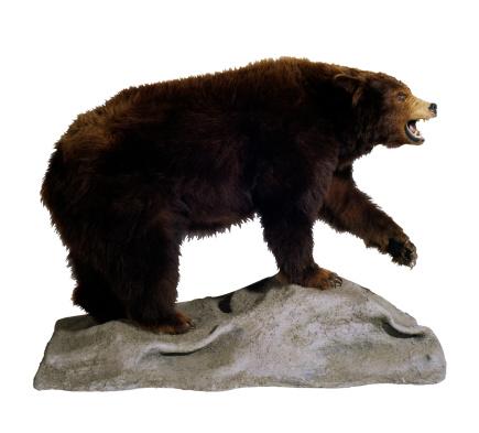 背景「Stuffed Bear」:スマホ壁紙(2)