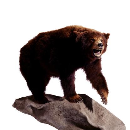 背景「Stuffed Bear」:スマホ壁紙(7)