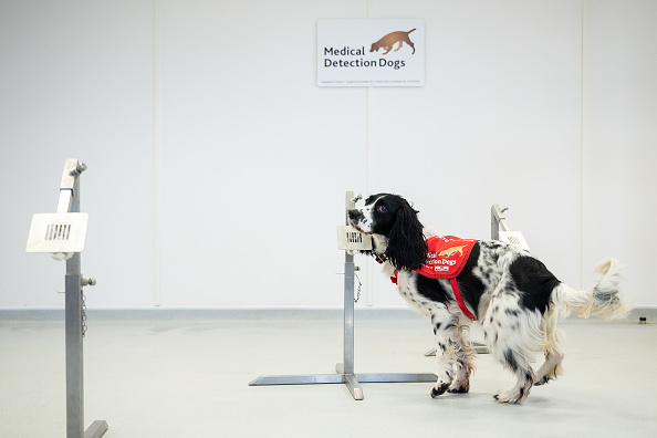Smelling「Medical Detection Dogs Are Being Re-trained To Help Identify Covid-19」:写真・画像(5)[壁紙.com]