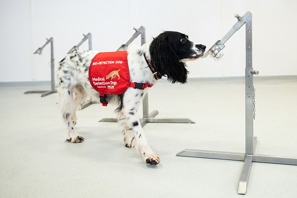 Medicine「Medical Detection Dogs Are Being Re-trained To Help Identify Covid-19」:写真・画像(14)[壁紙.com]