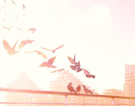 Flock Of Birds「Birds flying over the River Thames」:スマホ壁紙(11)