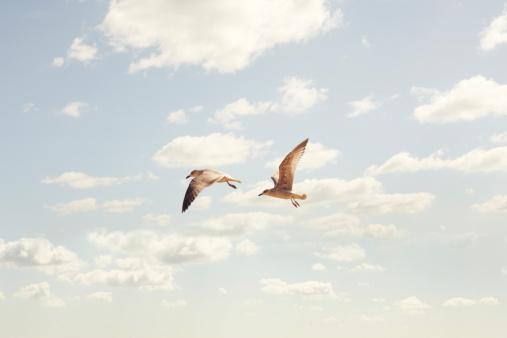 Seagull「Two Seaguls flying」:スマホ壁紙(9)