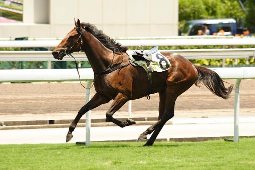 Walking「Horse Racing Accident」:スマホ壁紙(12)