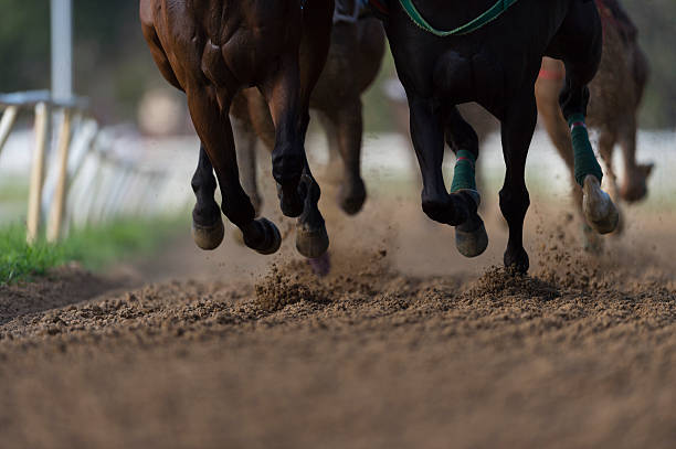 Horse Racing detail, hooves on all weather track:スマホ壁紙(壁紙.com)
