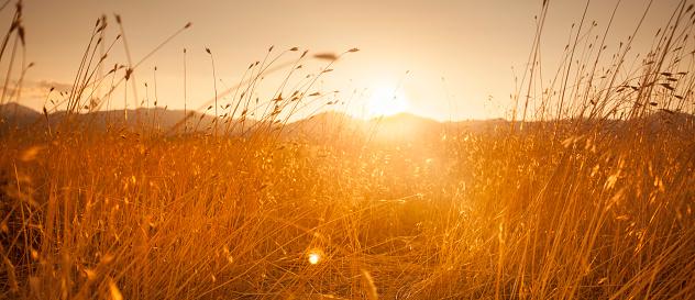 Barley「Farm field meadow panoramic path at sunset」:スマホ壁紙(16)
