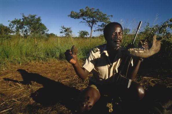 Tom Stoddart Archive「Rhino Poaching」:写真・画像(3)[壁紙.com]