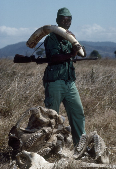 Tom Stoddart Archive「Confiscated Ivory」:写真・画像(5)[壁紙.com]