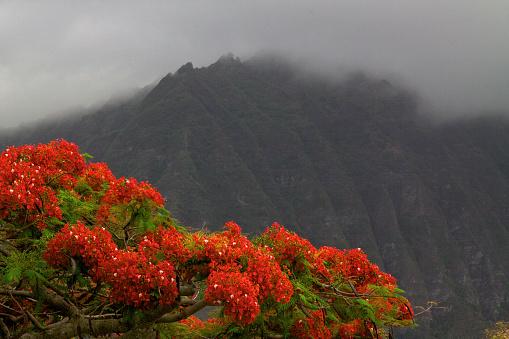 コオラウ山脈「Flowers and Ko'olau Mountain Range」:スマホ壁紙(11)