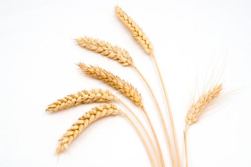 Wheat「Six stems of wheat on a white background」:スマホ壁紙(10)