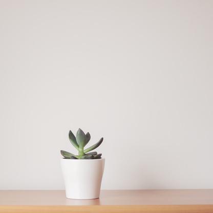 Plant「Succulent plant in a plant pot」:スマホ壁紙(1)