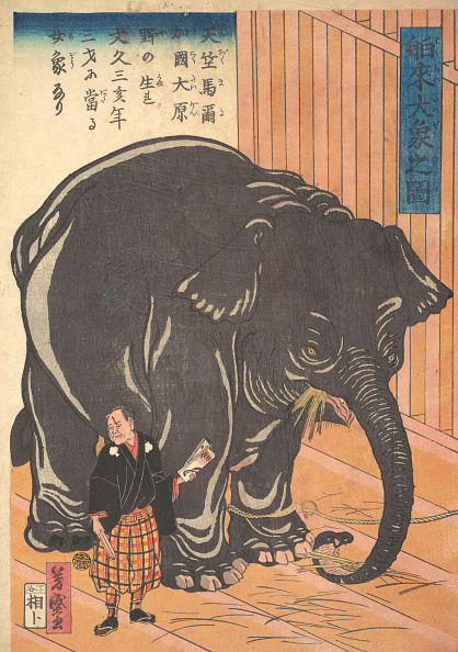 Adult「View Of The Large Imported Elephant」:写真・画像(13)[壁紙.com]