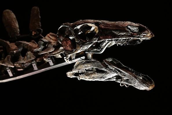 Dinosaur「Complete Stegosaurus Fossil Unveiled At Natural History Museum」:写真・画像(9)[壁紙.com]
