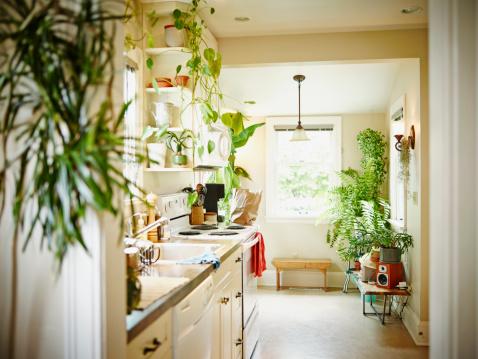 植物「Kitchen in home」:スマホ壁紙(11)