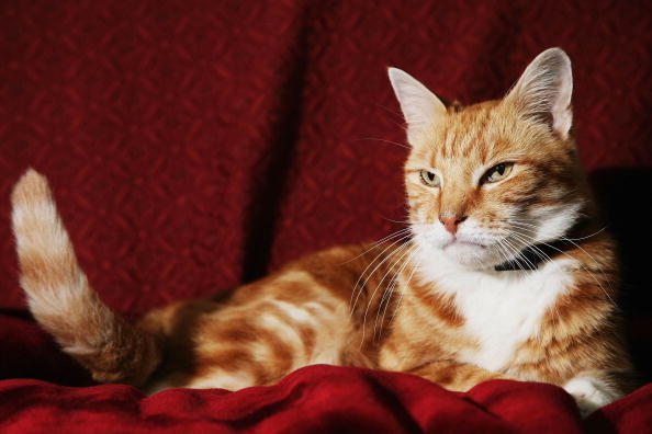 Sofa「Cat Missing For 11 Years Returns Home」:写真・画像(0)[壁紙.com]