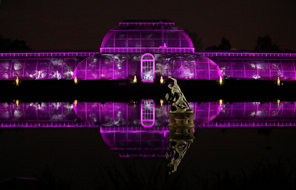 Greenhouse「Illuminated Trail Lights Up Kew Gardens For Christmas」:写真・画像(13)[壁紙.com]