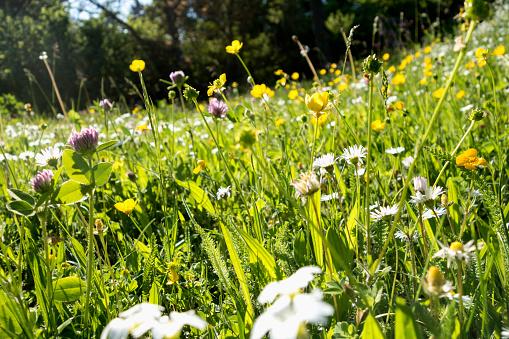 Wildflower「Flowers on a summer meadow」:スマホ壁紙(17)