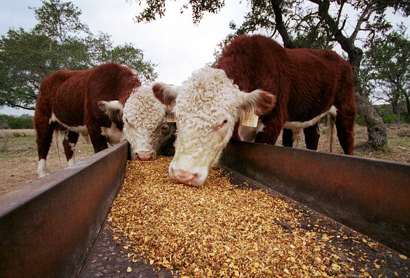 Beef「Cattle Industry in Texas」:写真・画像(9)[壁紙.com]