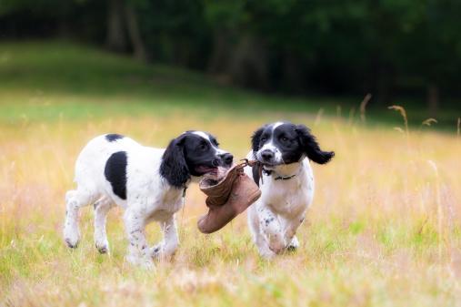 Puppy「friendship and fun」:スマホ壁紙(3)