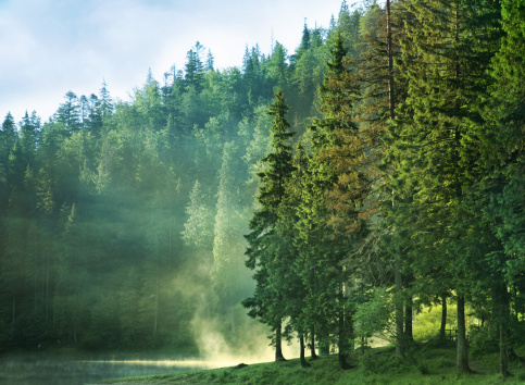 Grove「foggy mountain lake at dawn with pine forest」:スマホ壁紙(17)