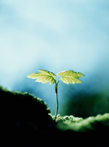 Hope - Concept「Tree seedling, close-up」:スマホ壁紙(10)