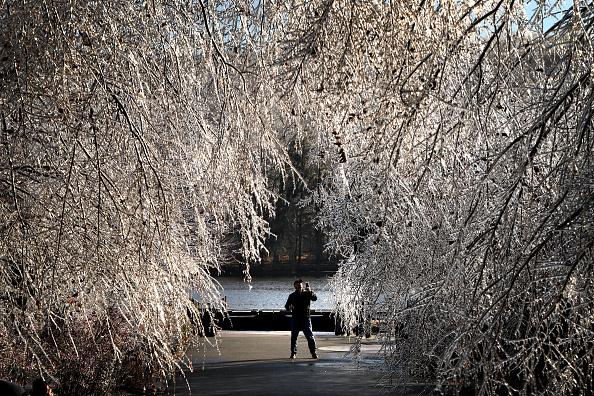Tree「Winter Storm Brings Ice, Snow, And Rain Through Northeast」:写真・画像(4)[壁紙.com]