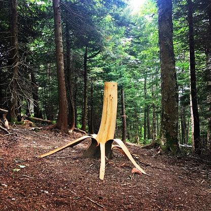 グリーン山脈「Vermont Tree」:スマホ壁紙(16)