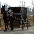 Horse-drawn carriage壁紙の画像(壁紙.com)
