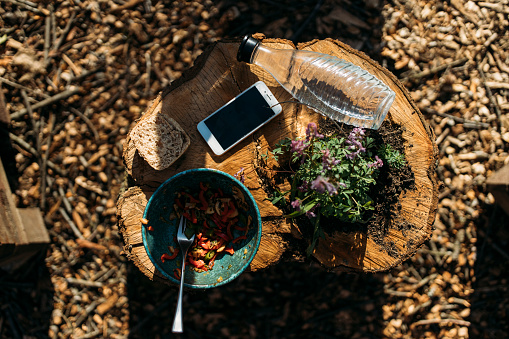 Mobile Phone「Smartphone, snack, plant and water bottle on tree stump」:スマホ壁紙(13)