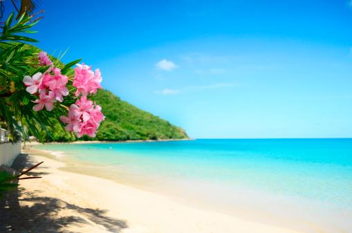 Caribbean「perfect beach」:スマホ壁紙(12)