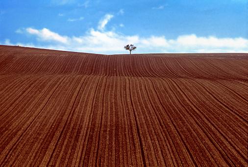 Plowed Field「Freshly ploughed field」:スマホ壁紙(19)