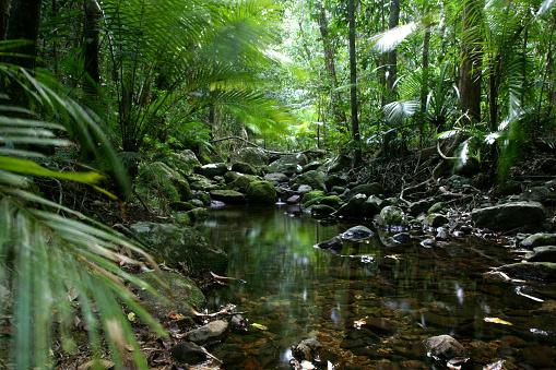 Queensland「Tropical_Rain_Forest」:スマホ壁紙(14)