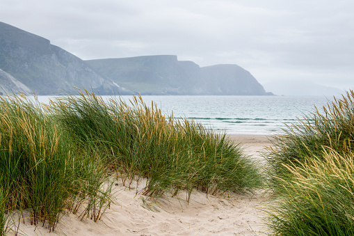 Achill Island「Grasses grow in the sand of a beach along a path with a view of the coastline through the mist」:スマホ壁紙(18)