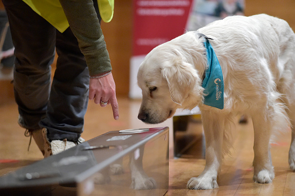 Smelling「Covid-19 Sniffing Dogs Activity In A School In Bolzano」:写真・画像(3)[壁紙.com]