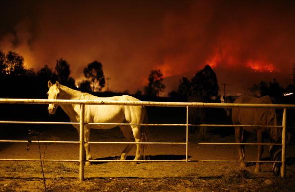Horse「Santa Ana Winds Stoke Wildfires In Southern California」:写真・画像(6)[壁紙.com]