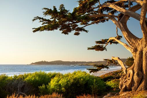 Monterey Peninsula「Colorful beachfront in Carmel-by-the-Sea」:スマホ壁紙(2)