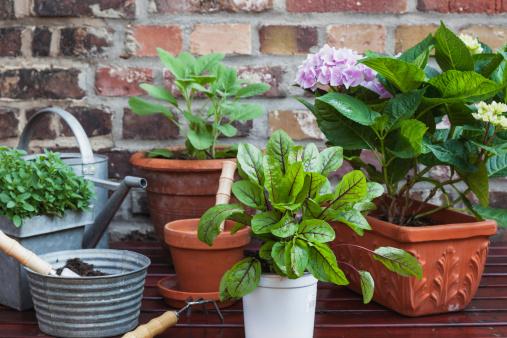 Planting「Germany, Plants for the balcony」:スマホ壁紙(18)
