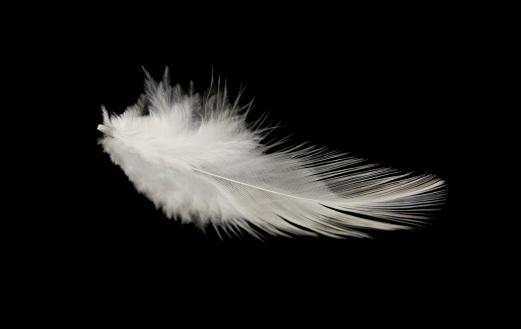 Intricacy「Single White Feather」:スマホ壁紙(18)