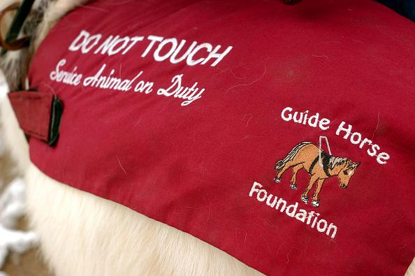 Animal Eye「Tiny Horse Keeps Eyes On Big Responsibility」:写真・画像(7)[壁紙.com]